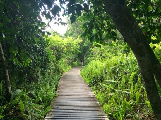 Bukit Lima Forest Park