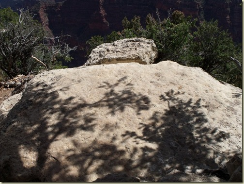 02 Tree shadows on rock from BAP trail NR GRCA NP AZ (1024x768)
