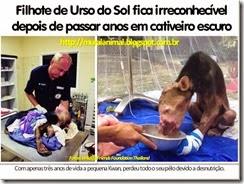 urso_do_sol