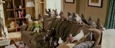 28 les pigeons