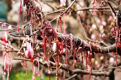 800px-Martenitsa_magnolia