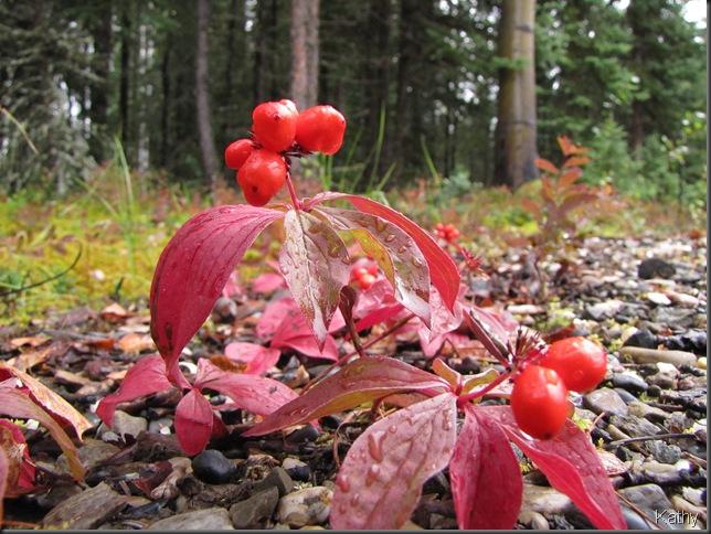 More Grounddog wood berries