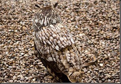 animal-camouflage-5