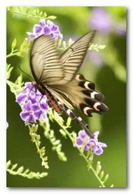 poze-smartphone-fluturi