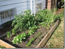 vegetable-garden_5_1
