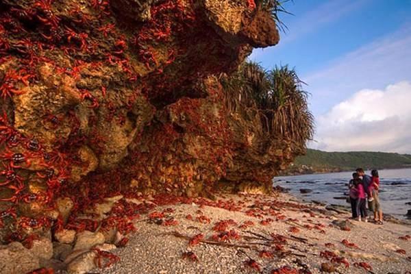 Crabs – Christmas Island 1