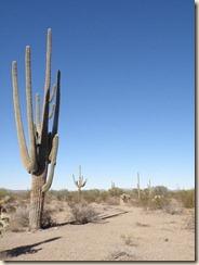 Cactus-Why (3)
