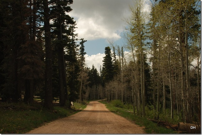 05-18-13 B Kaibab National Forest (24)