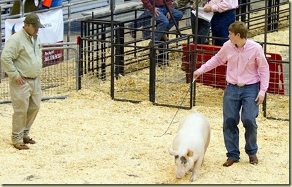 Payne showing pig, Jan. 2013