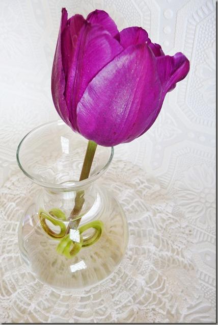 tulip 008