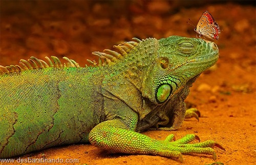 fotos de animais na hora certa desbaratinando  (14)