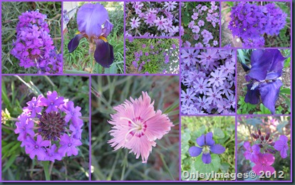 purple-pink collage