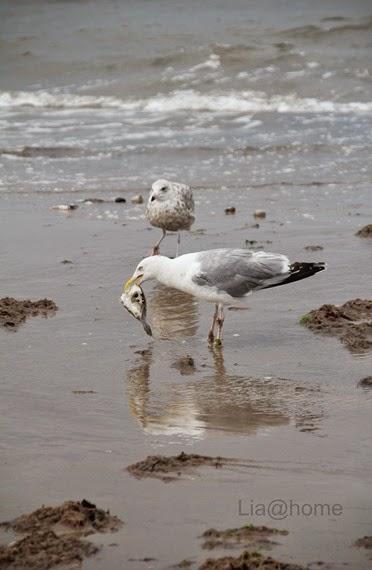 Egmond aan Zee 302 (2)