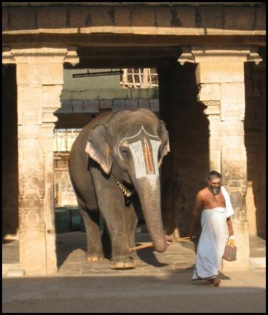 Shivite Temple Elephant