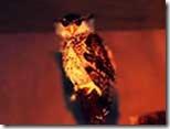 Nocturnal-Birds-Animals