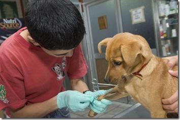 Jornadas de castración de perros en la Costa