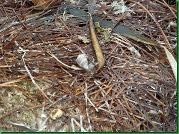 Mrazek Pond & Snake Bight Trail 078