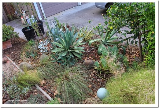 131002_driveway_succulent_bed_before_06