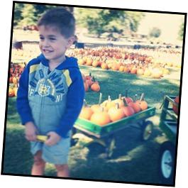 Max pumpkins