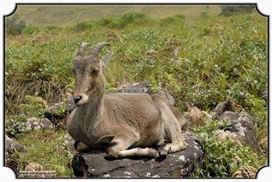 MNR_316_DSC0105_www.keralapix.com