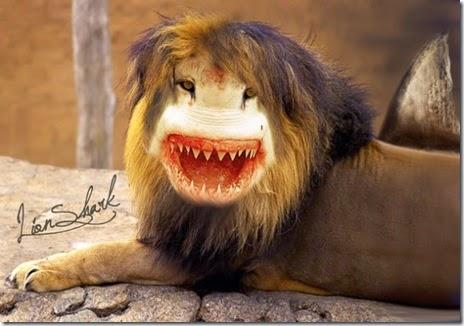 animal-photoshop-005