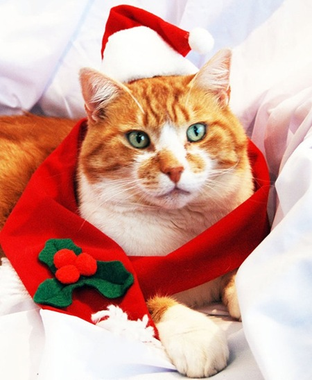 santa-clause-cat-l