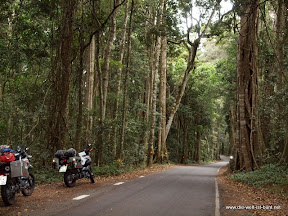 Düsterer Waldweg nach O´Reilys