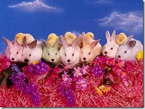 conejos y pollitos