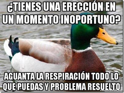 0 pato consejos cosasdivertidas info (4)