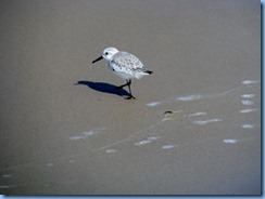 7137 Texas, South Padre Island - Beach access #3 - Sanderling