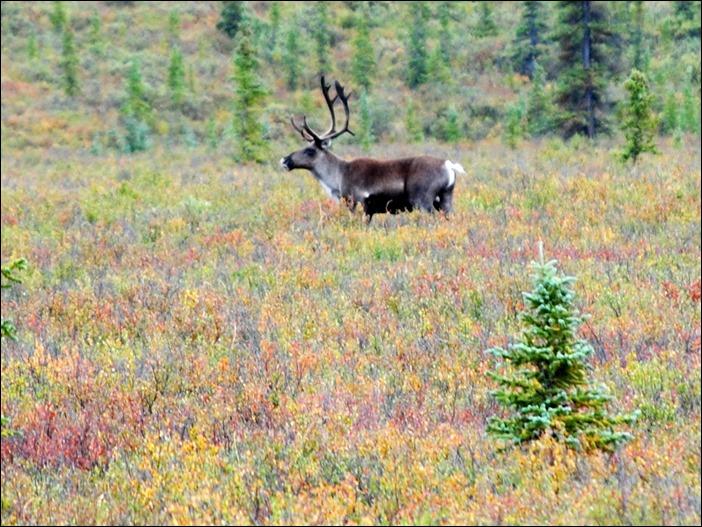 2013_08_Alaska 1003