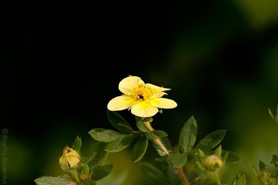 blom_20111014_tok1