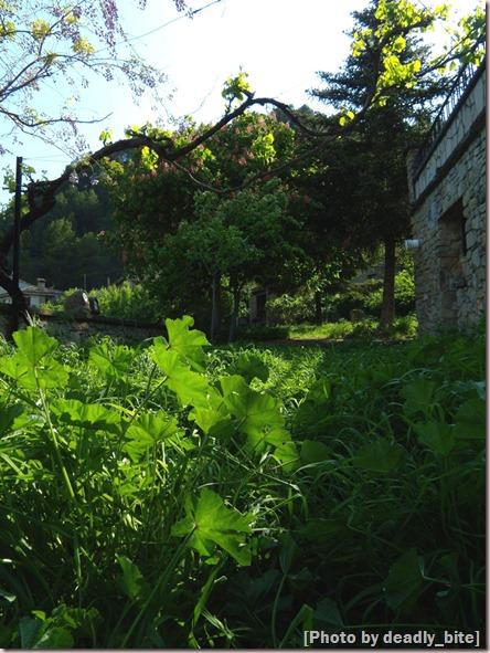 """""""Primavera en Rocafort""""; D.B., 03/05/09 17:23"""
