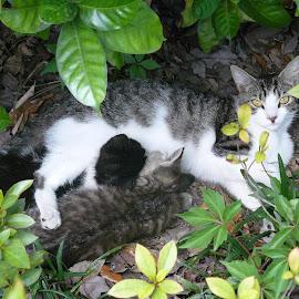 Good Mommy by Jonna Flynn - Animals - Cats Kittens ( jacksonville, cat, florida, litter, kittens, nursing )