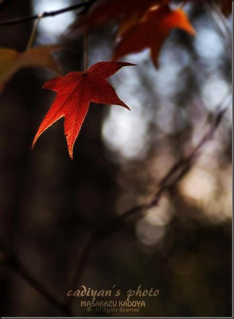秋の終焉_01