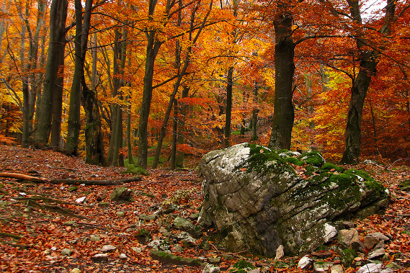 Autumn view in the Mehedinti mountains from Romania.