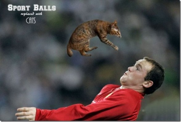 cats-sports-photoshop-16