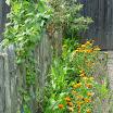 Venning bloemen 3 foto Griet Santy.JPG