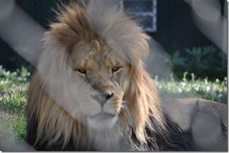 07-11-11 zoo 48