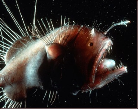 Amazing Animals Pictures Angler Fish (1)