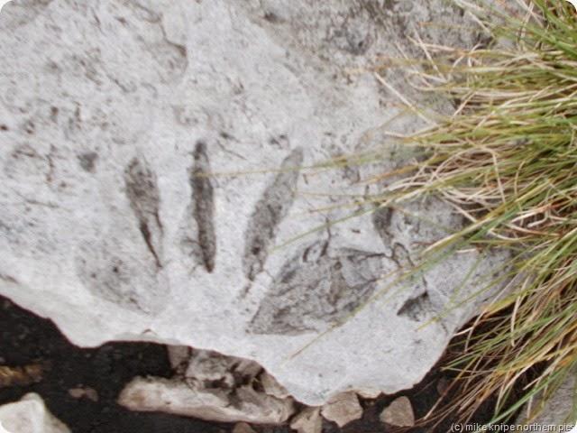 redgleam fossil