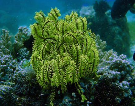 Amazing Pictures of Animals, Photo, Nature, Incredibel, Funny, Zoo, Crinoid, Lamprometra palmata, Alex (1)