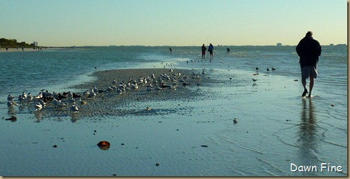 Sanibel Shell and birds_042