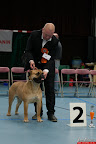 20130510-Bullmastiff-Worldcup-0335.jpg