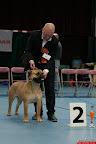 20130510-Bullmastiff-Worldcup-0335.jpg