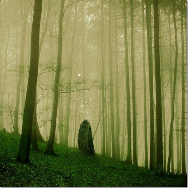 Florestas sombrias (4)