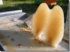 včelky a med květen 147