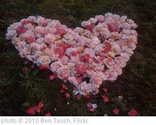 'Heart of flowers' photo (c) 2010, Ben Tesch - license: http://creativecommons.org/licenses/by/2.0/