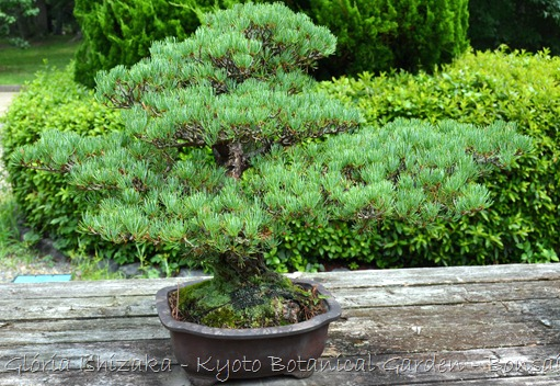 Glória Ishizaka -   Kyoto Botanical Garden 2012 - 44