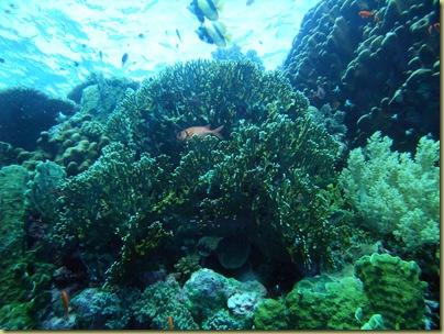 LBS Fish Coral